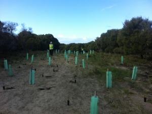 Re-vegetating an old track