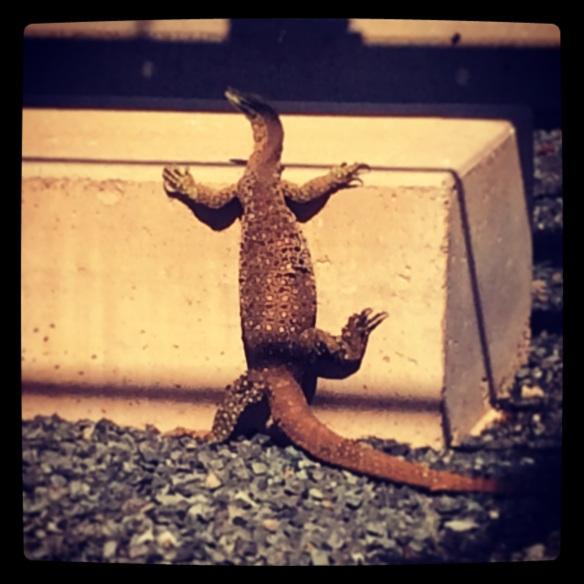 lizard chillen
