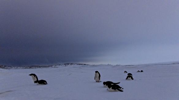 Tattered Passport, Antarctica.